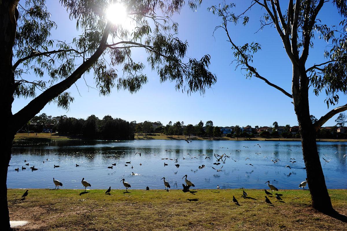 Parks Amp Reserves Blacktown Australia